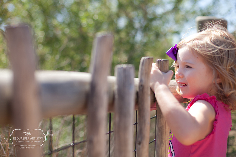 The Peoria Zoo is a great small zoo.  They have a wonderful African Safari area complete with giraffes, rhinos, zebras, and two lions.  Here the gemstone was goating on Arthur the lion to roar.