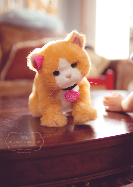 This little cat has become the bain of my existance (yet such a great lighting model!).  If you have ever wondered what present to purchase for a child that will annoy their parents - fear no more.  All robotic kitties bring out these emotions in me (I rather like me real kitty).